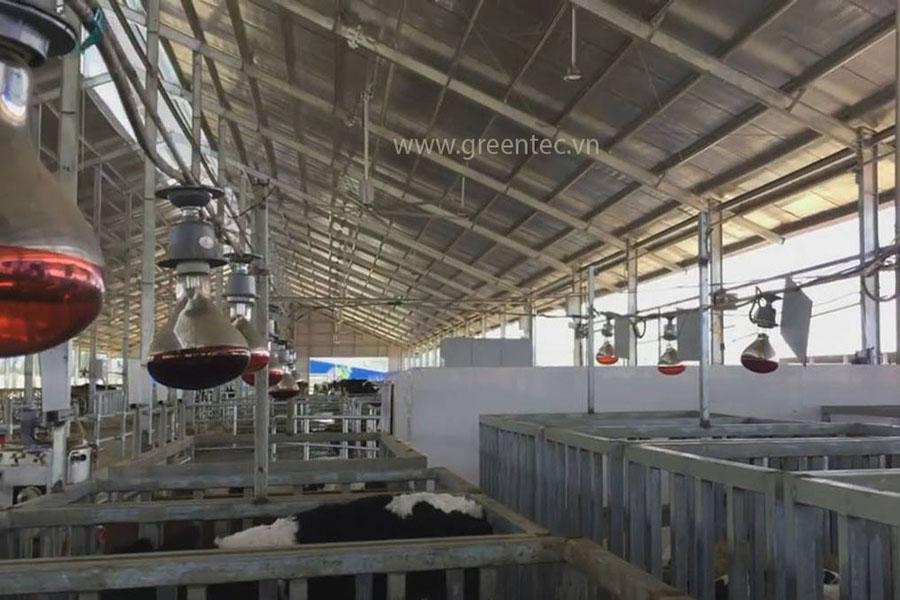 Trang trại bò sữa Tây Ninh 01