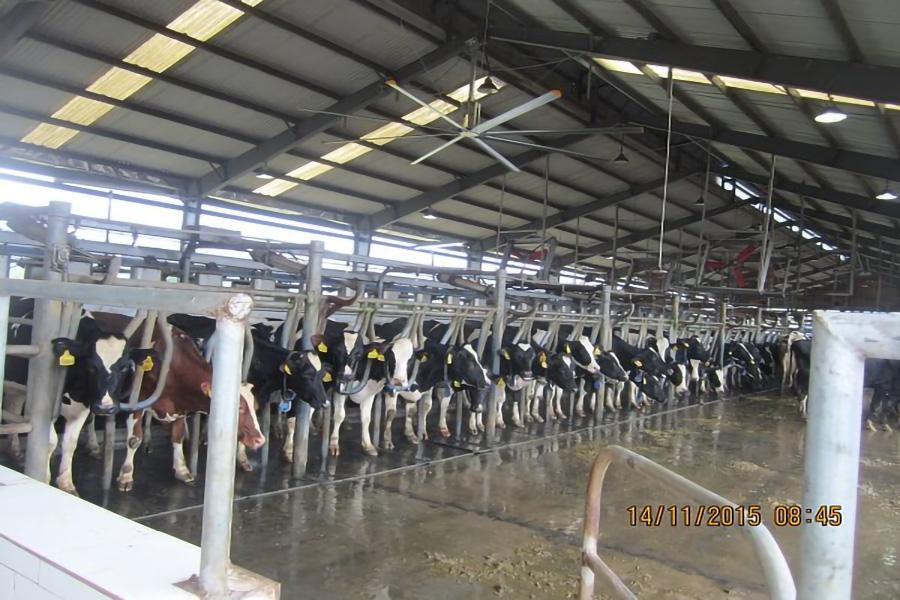 Trang trại bò sữa Tây Ninh